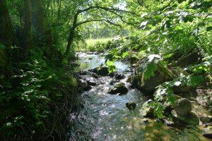 """""""Natura-2000-Gebiet"""" Eschweiler Tal"""