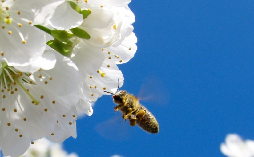 Frühling im Zentrum: Biene, Buche, Bergmolch & Co.