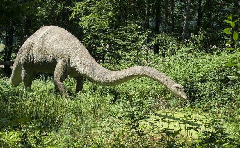 Ein Rekordgigant der Urzeit im Dinosaurierpark Teufelsschlucht – das lebensgroße Modell des Seismosaurus steht bis November in der Südeifel
