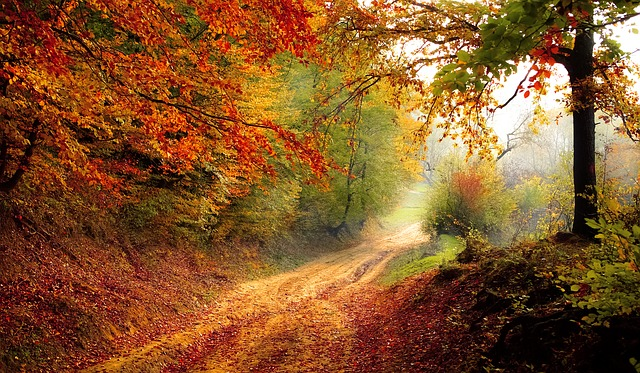 Lust auf Eifel-Herbst